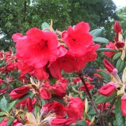 Blooms around Mostyn Hall
