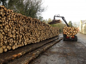 Logs piled for drying