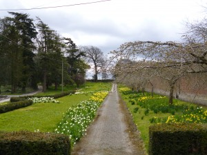 Gardens at Mostyn Hall