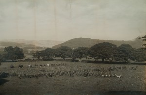 Photograph courtesy of the Regimental Museum of the Royal Welch Fusiliers
