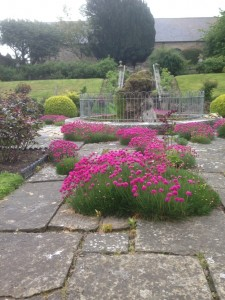 Fountain and Armeria Maritima at Mostyn Hall - 03-06-15
