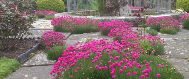 Fountain and flowers at Mostyn Hall this week