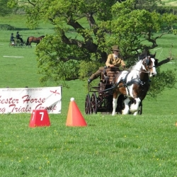 Horse Driving Trial at Mostyn Hall