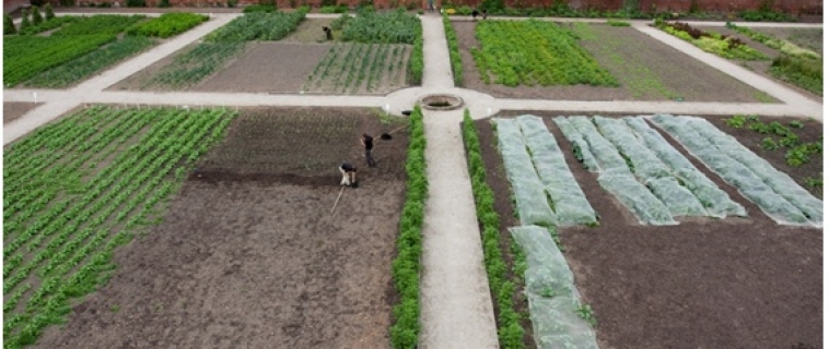 Community project at restored walled kitchen garden